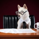 boss-dog