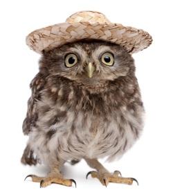 ugle-med-hat