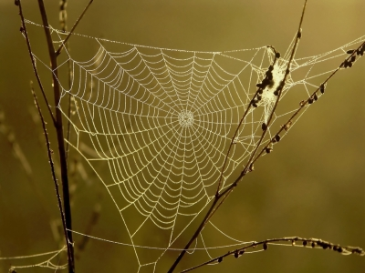 web-integration